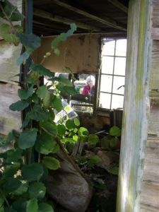 Joan looking through the window of the shed that housed the Print Shop