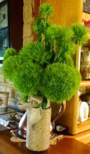 Dianthus 'Green Trick'